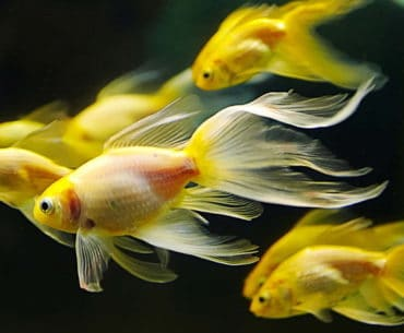 Gambar ilsutrasi Ikan dalam Aquarium