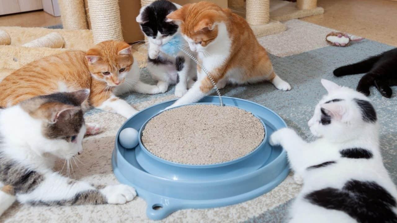 Mainan Kucing yang Bagus