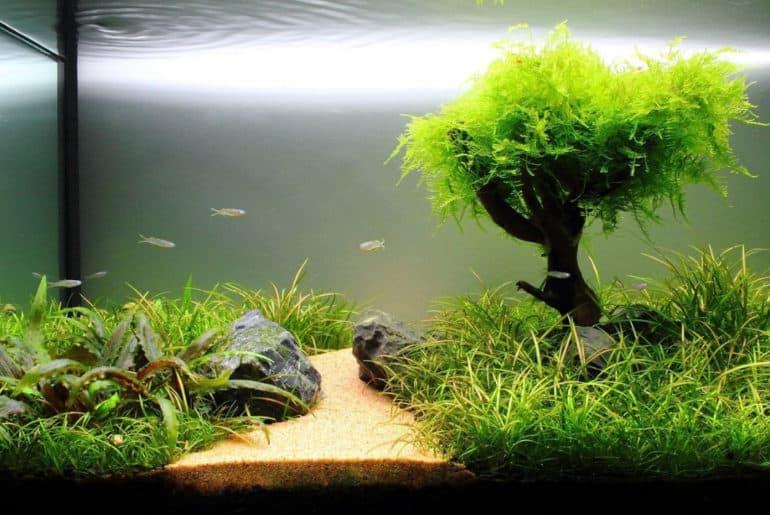 Penjernih Aquarium Filter Terbaik